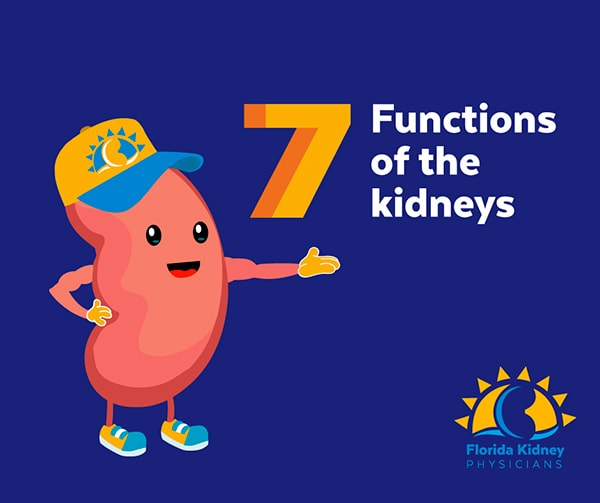Seven functions of kidneys